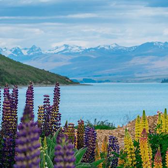 ニュージーランドの海外旅行・海外ツアー