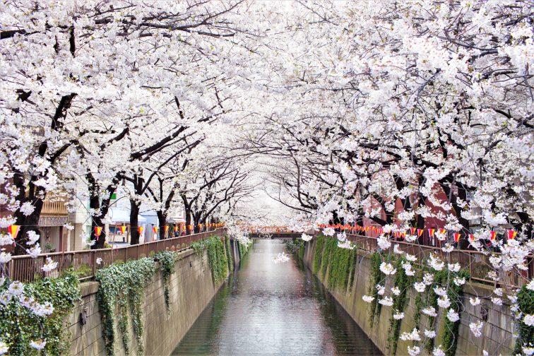 東京 お花見 2021 目黒川