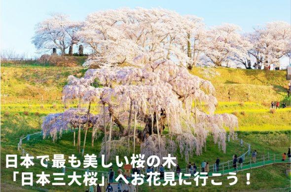 日本三大桜へお花見に行こう!一度は見たい日本で最も美しい桜とは?