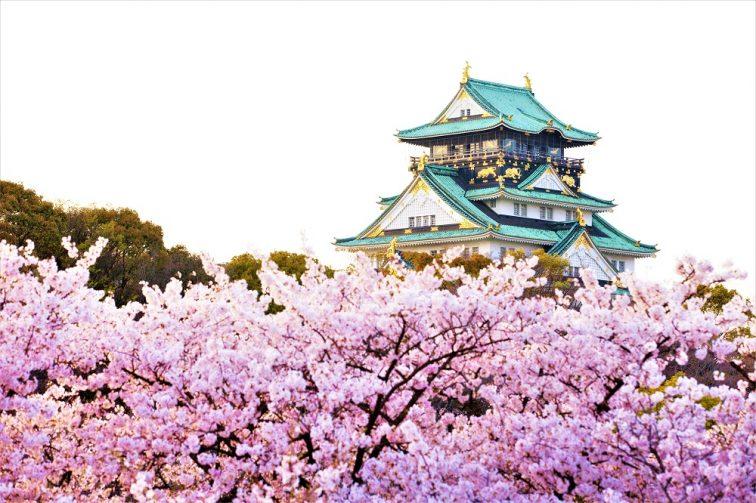 お花見2021 桜名所 コロナ 大阪城