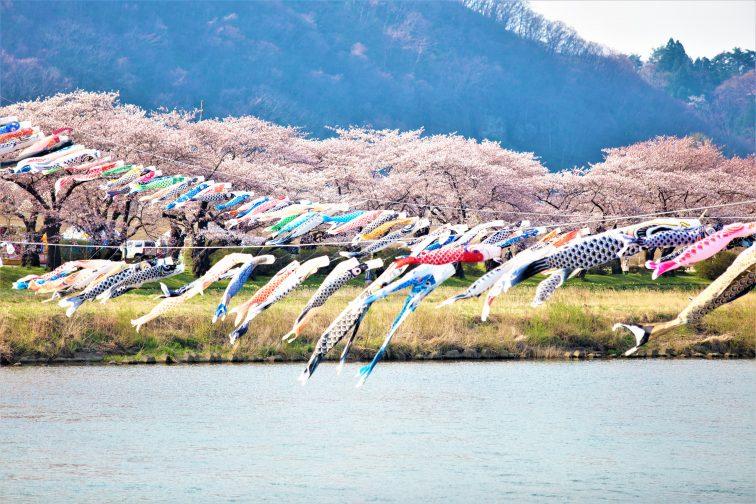 お花見2021 桜名所 コロナ 岩手 北上展勝地