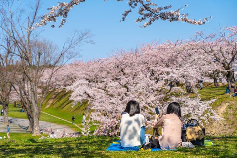 お花見2021 桜名所 コロナ 五稜郭