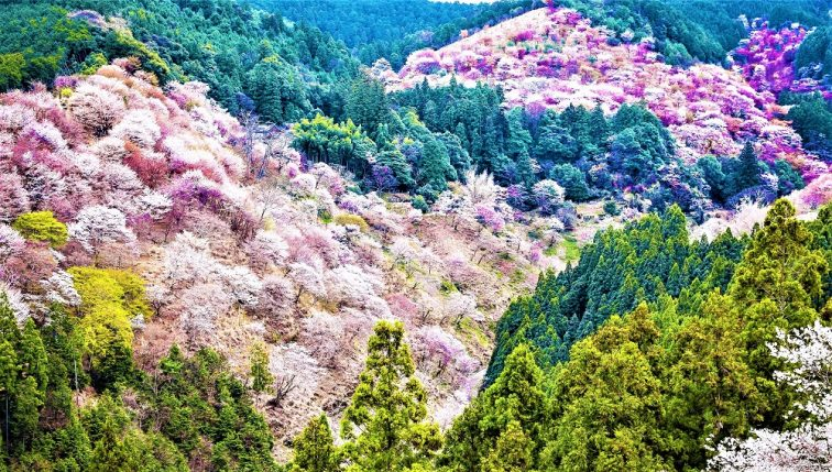 お花見2021 吉野山