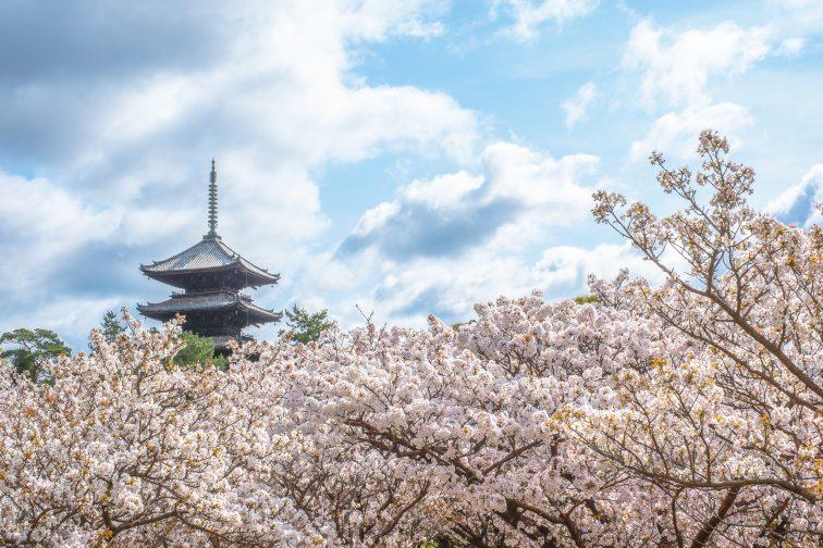 お花見2021 仁和寺