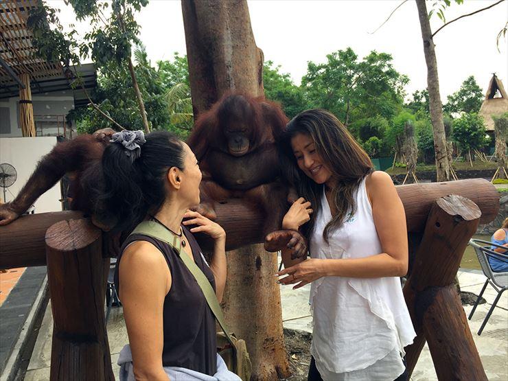 動物と触れ合うことができるサービスが充実