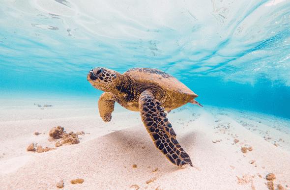 ハワイのきれいな海よ〜♪