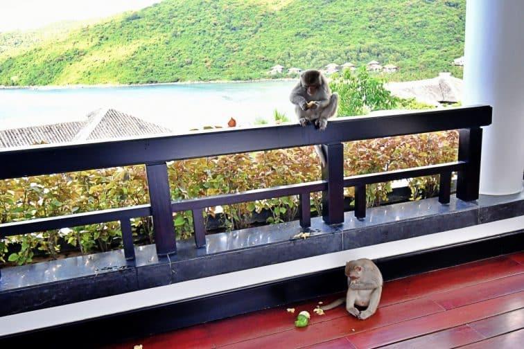 インターコンチネンタルダナンペニンシュラリゾートの可愛らしいサル