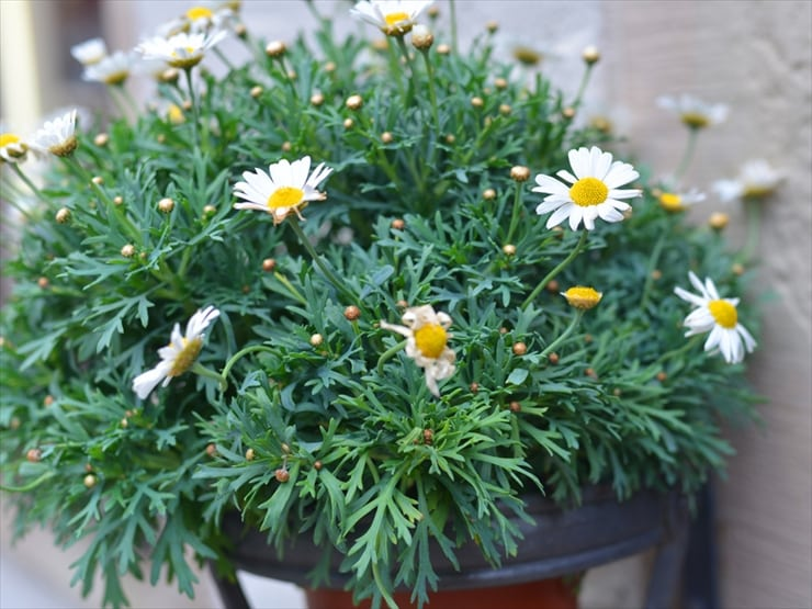 店の軒先に植えられた可愛らしい花々も目を楽しませてくれる。