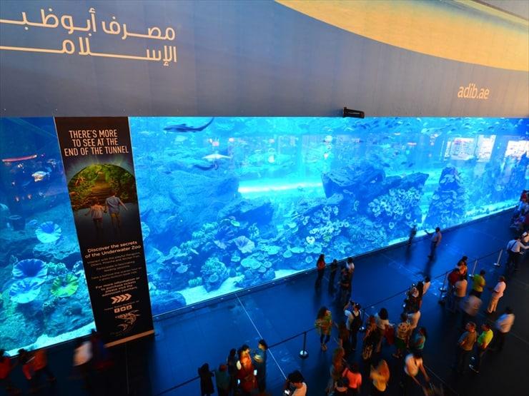 ドバイ水族館: 水槽の中を潜る体験ダイビングDh110も開催(要予約)している。