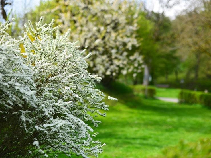 咲き乱れる花々が待ちに待った春の訪れを告げる。