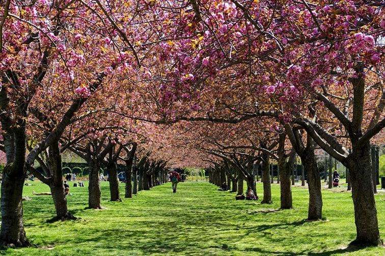 ブルックリンのボタニカル・ガーデン