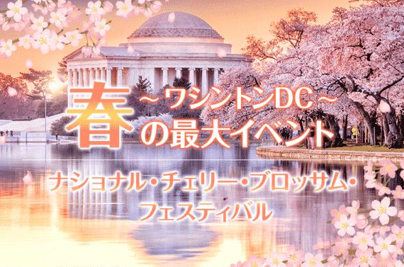 ワシントンDC☆春の最大イベント『ナショナル・チェリー・ブロッサム・フェスティバル』