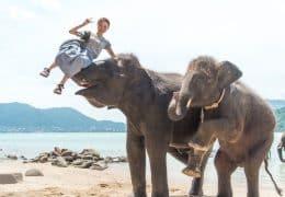 海で象遊び「エレファントスイミング」で象の鼻で持ち上げられている女性