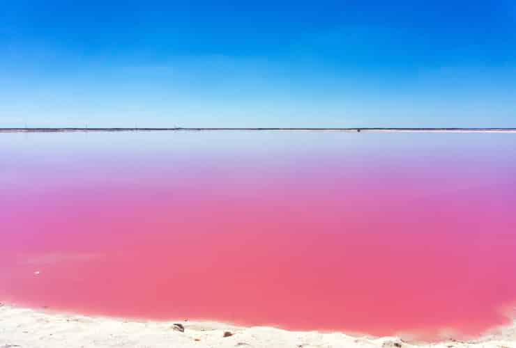 乾季の鮮やかなピンク色