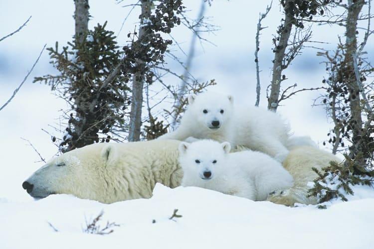 ユーコン野生動物保護区にはたくさんの動物たちが暮らしています
