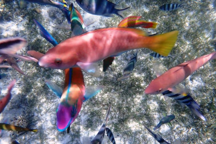 シュノーケリング カラフルな熱帯魚