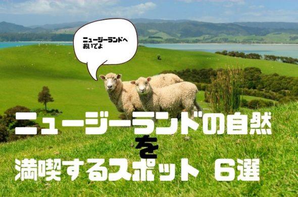 ニュージーランド・羊