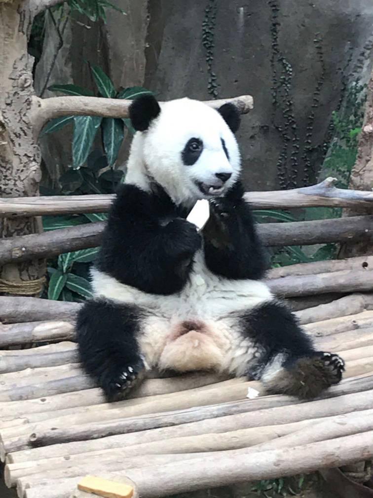パンダに会える!「マレーシア国立動物園」
