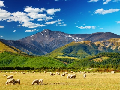 ニュージーランド・羊(3×4)
