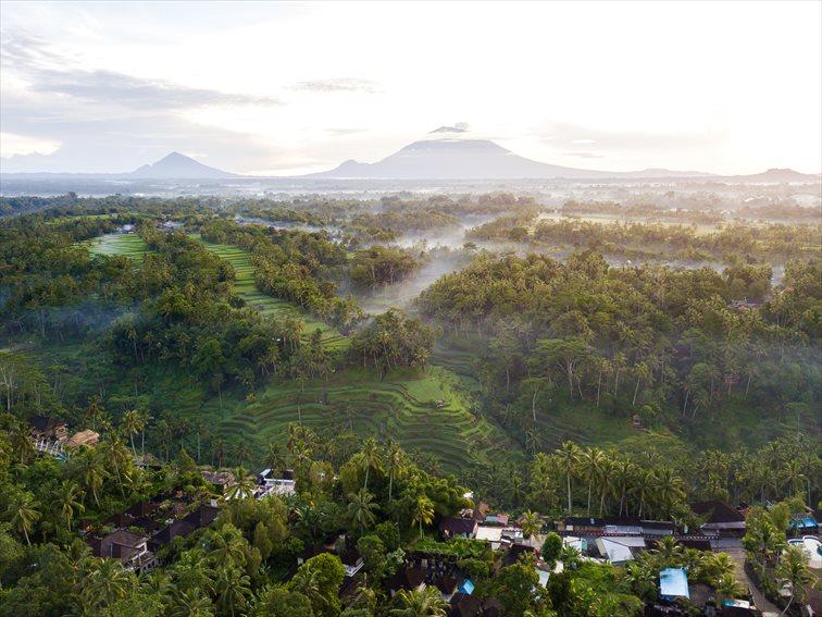 ウブドの熱帯雨林の森