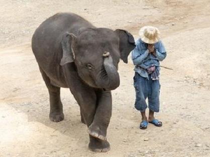 メーサエレファントキャンプの赤ちゃん象