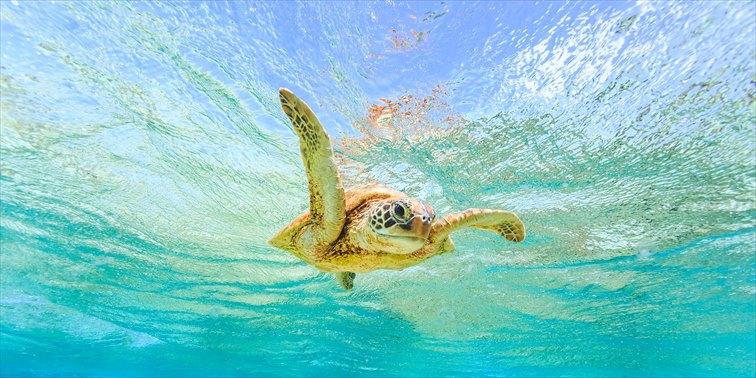 優雅に泳ぐウミガメの姿を見ることができるかも!