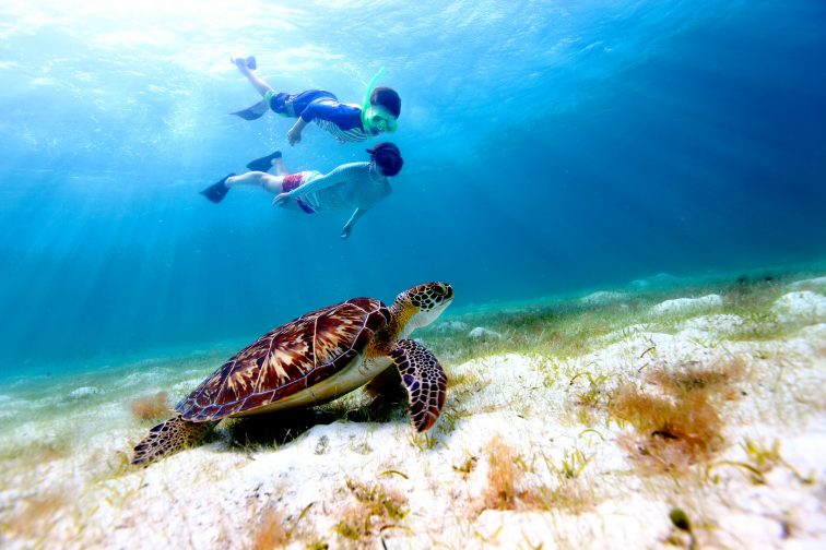 Snorkeling with Sea Turtle