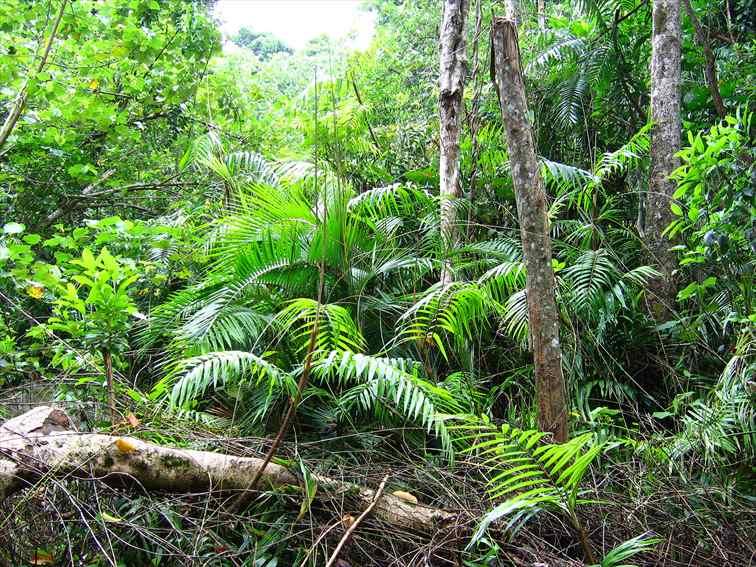 ジュラシックパークさながらのジャングルを探検しながら、バードウォッチングも楽しめる