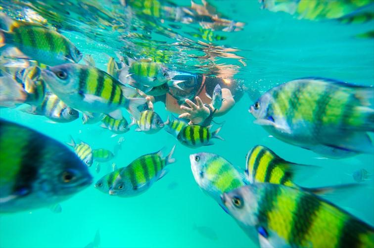 小さな魚たちが泳ぐ綺麗な海でのシュノーケリング