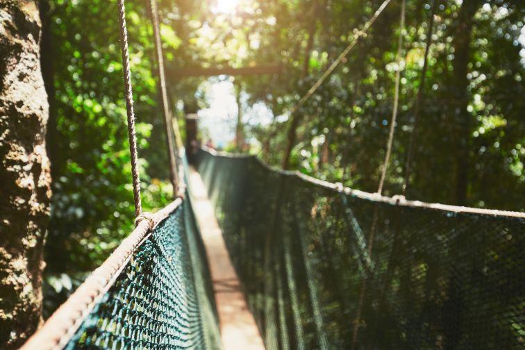 マレーシアのキャノピーウォーク