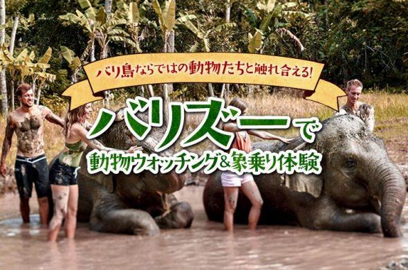 バリズーで動物ウォッチング&象乗り体験