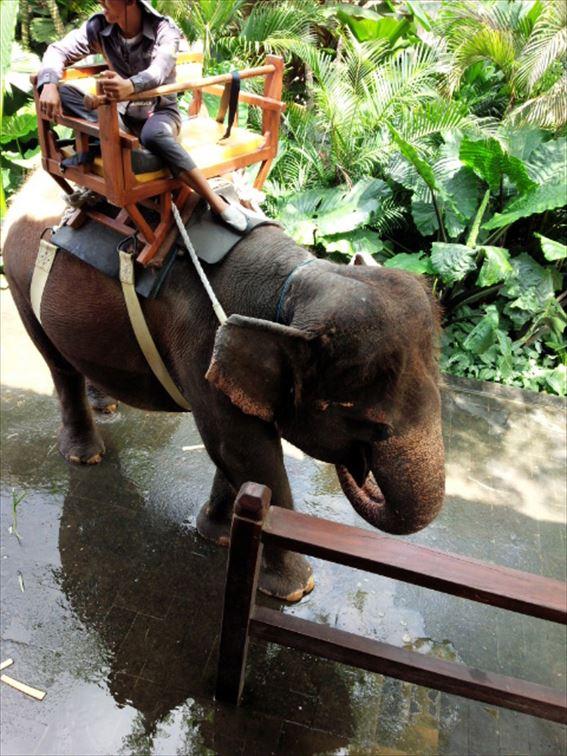 眺めの良い象乗り体験