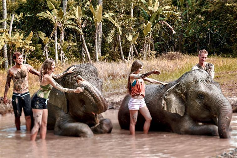 童心に返って泥んこ遊び感覚が癒される「エレファント・マッドファン」