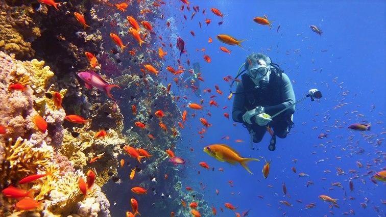 普段はなかなか見られないユニークな海洋生物に出合えるかも!