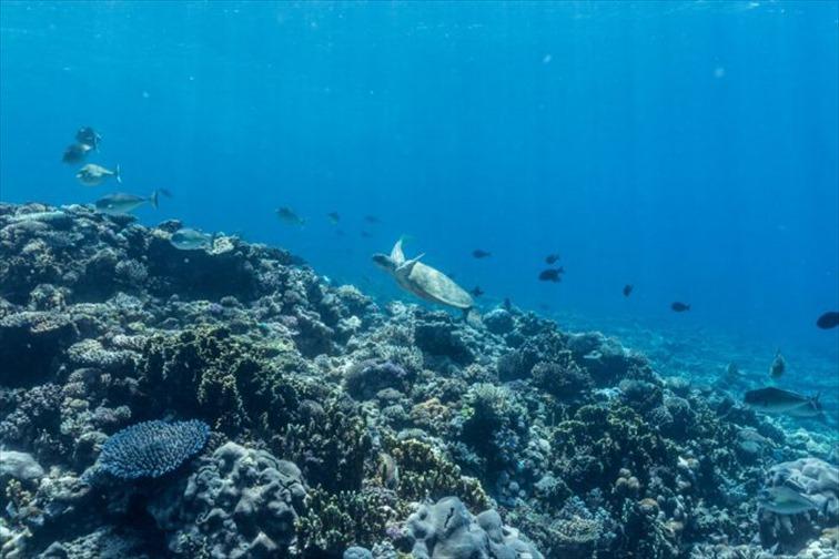 多種多様の魚やサンゴを間近に見れる