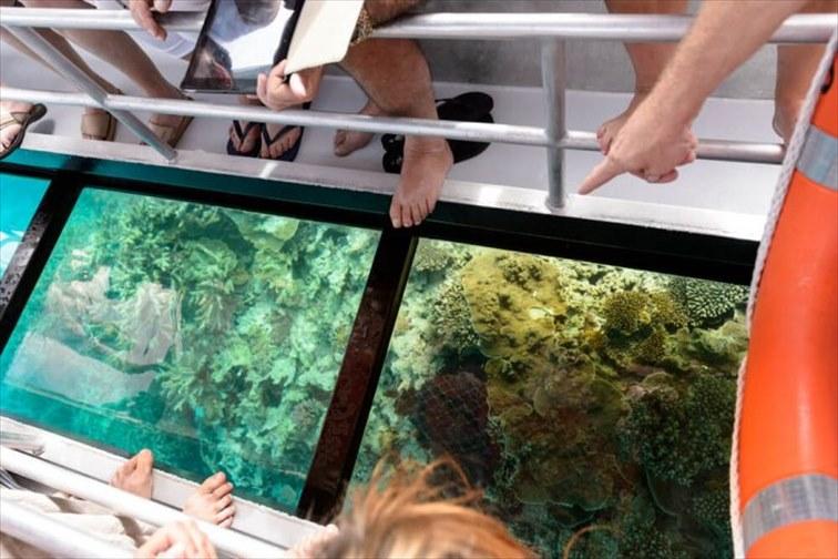 まるで大きな水族館の上にいるような感覚の「グラスボトムボート」