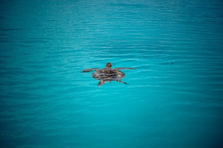 赤ちゃんガメが海へ帰る姿を見れるかも!