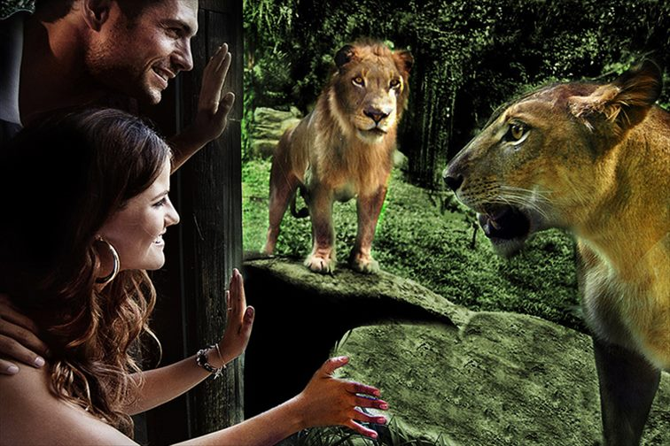 ライオンを間近で眺める「ワナ・レストラン」
