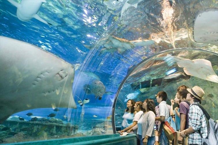 「アンダー・ウォーター・ワールド(Under Water World)」