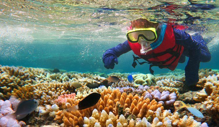 グレートバリアリーフの美しいサンゴ礁