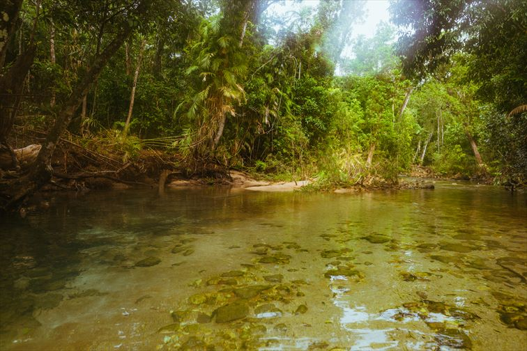 ヒンチンブルック島で熱帯雨林のトレイルウォーキング