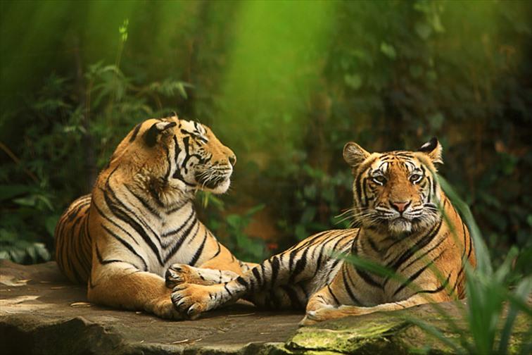 スマトラタイガーなど迫力のある動物たち