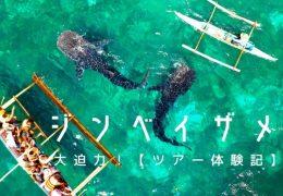 cebu article whaleshark