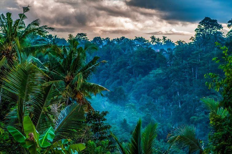 ウブドの熱帯雨林