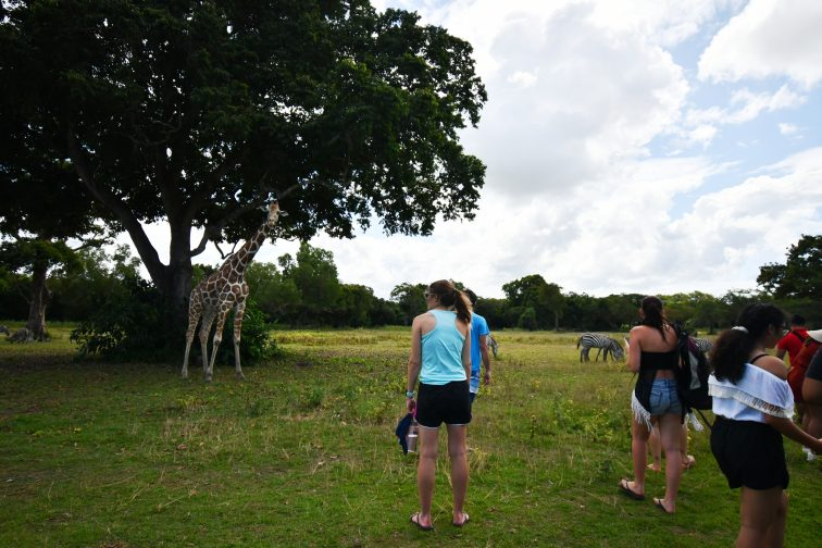 giraff meet people at safaripark
