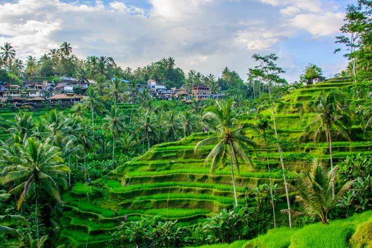 rice teracce