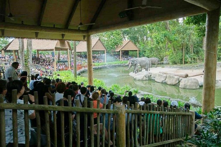 シンガポール動物園 象のショー