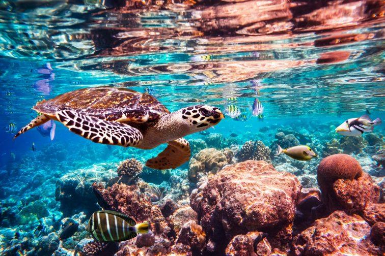 TurtleSea turtle
