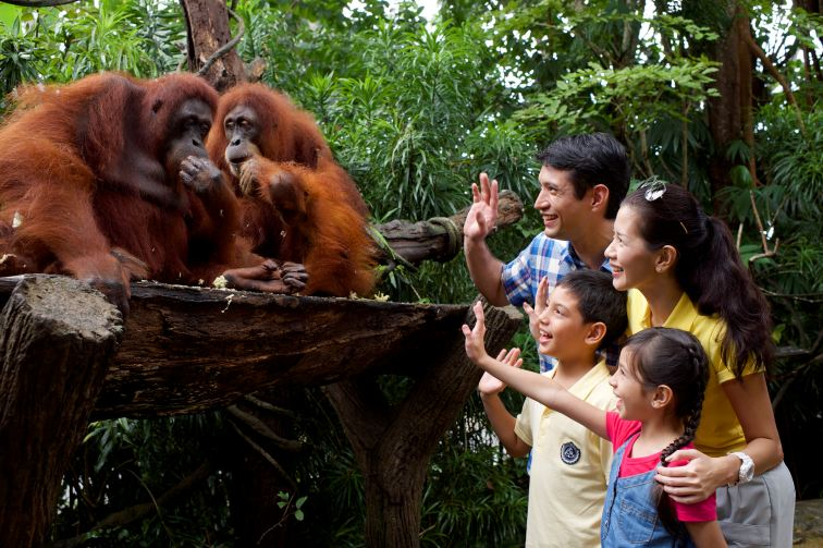 オランウータンを近距離で手を振る家族
