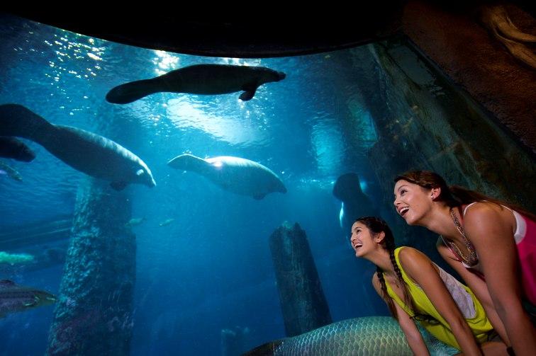 シンガポール動物園 マナティマニアツアー